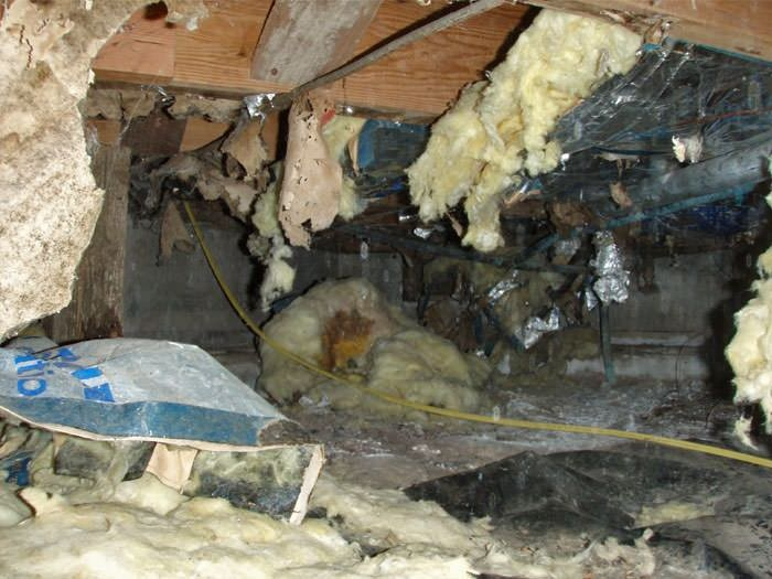 What Pests Are In Your Crawlspace?